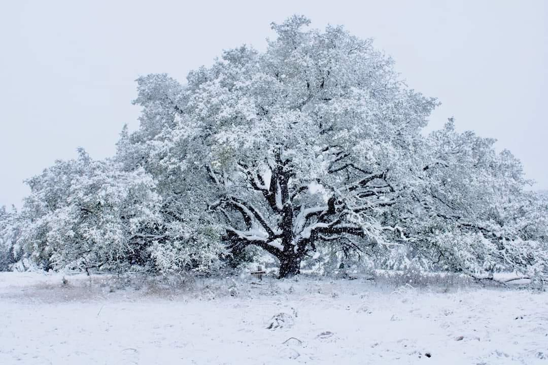 Record Snow for the Lone Star State