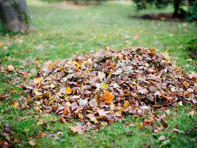 prepare for fall
