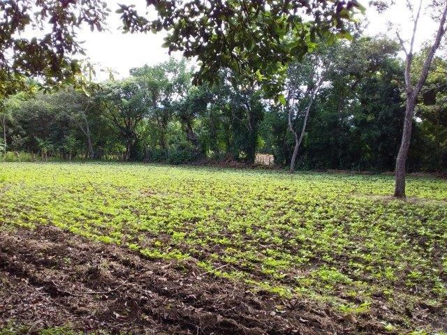 Farm-for-sale-nicaragua (14)