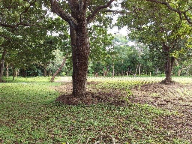 Farm-for-sale-nicaragua (15)