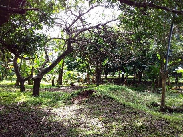 Farm-for-sale-nicaragua (19)