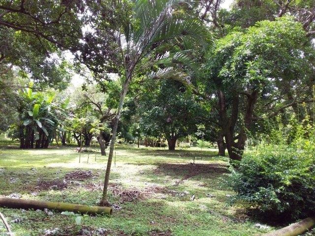 Farm-for-sale-nicaragua (24)