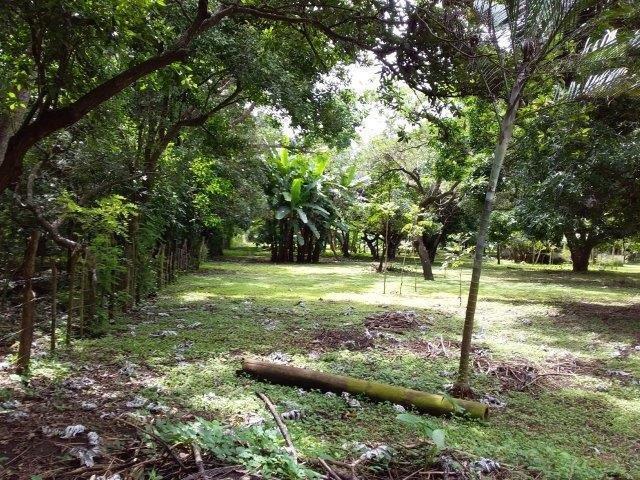 Farm-for-sale-nicaragua (25)