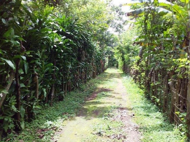 Farm-for-sale-nicaragua (26)
