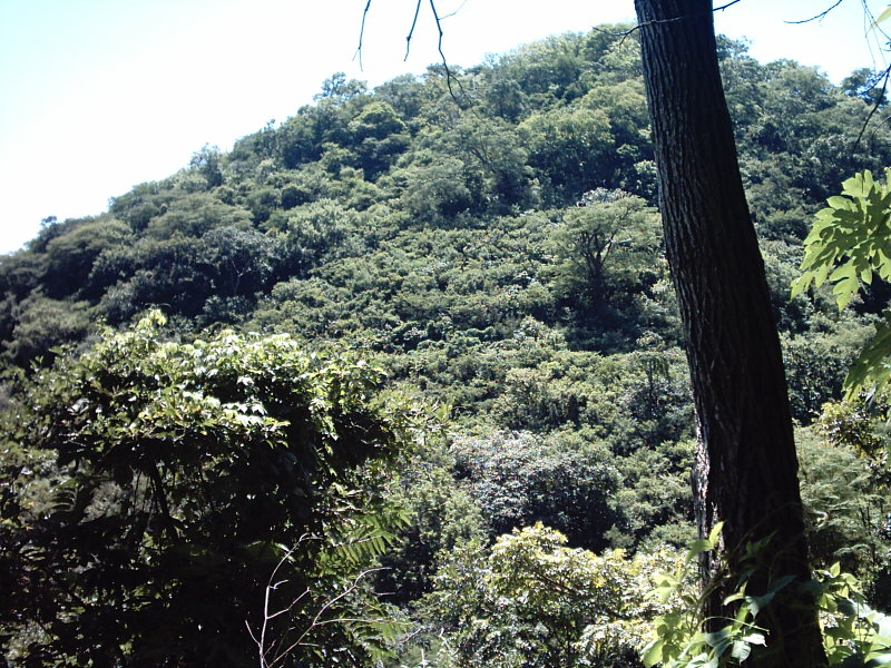 Nicaragua-Real-Estate-finca-ostional (11)