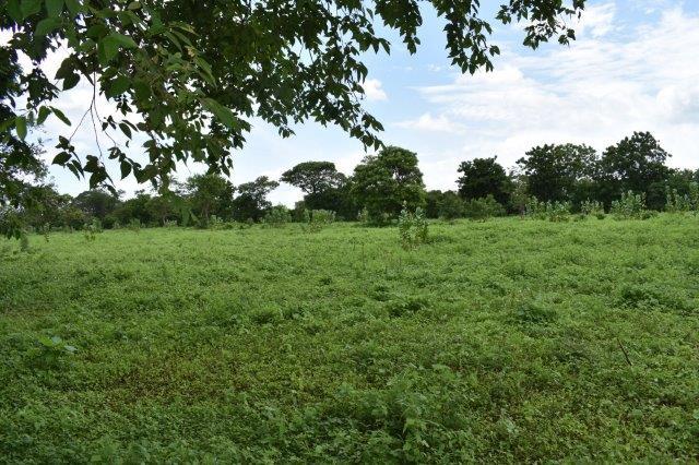 Nicaragua-bienes-raices-finca-san-rafael (10)