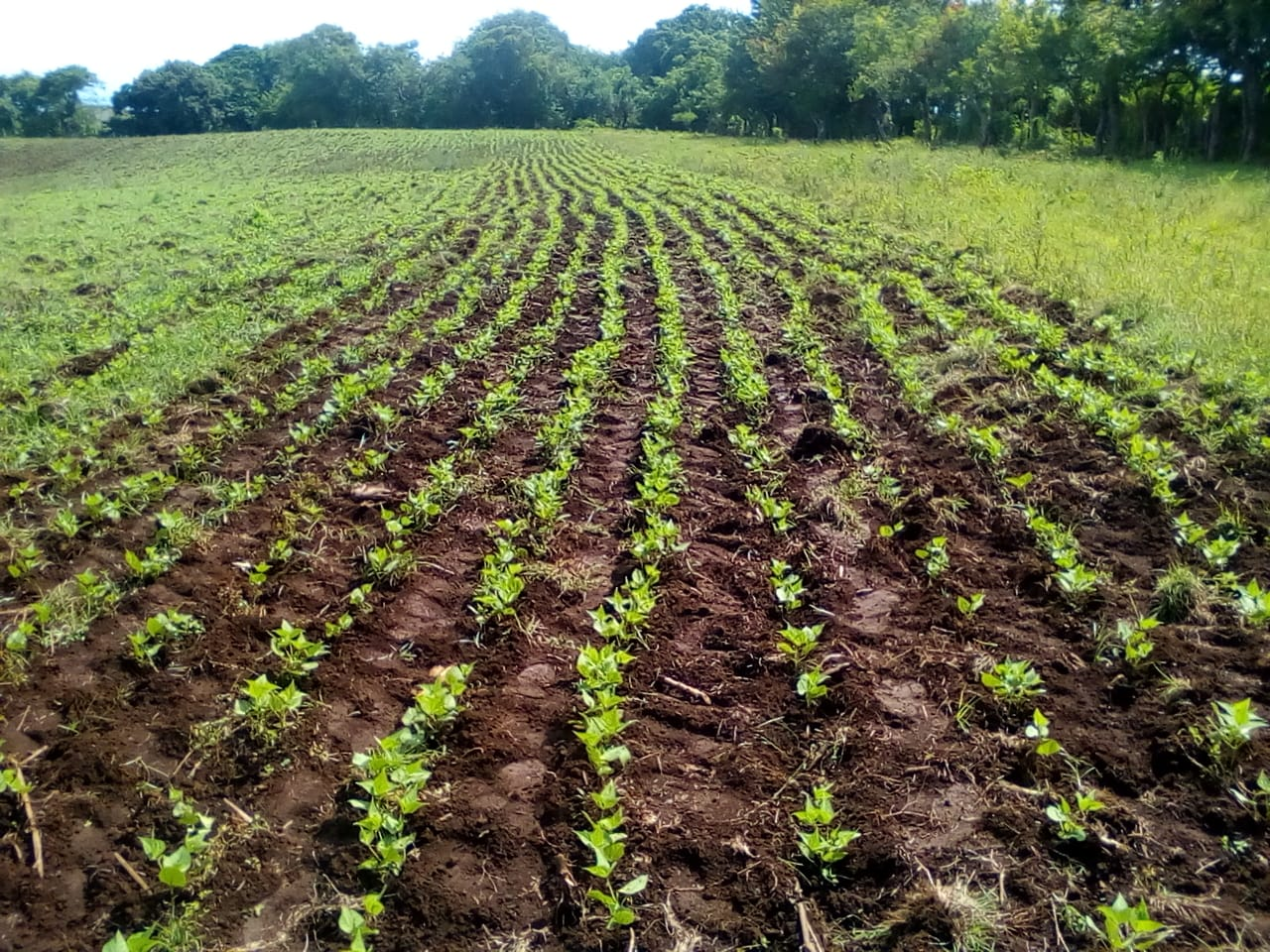 SOLD Land for agriculture or housing development