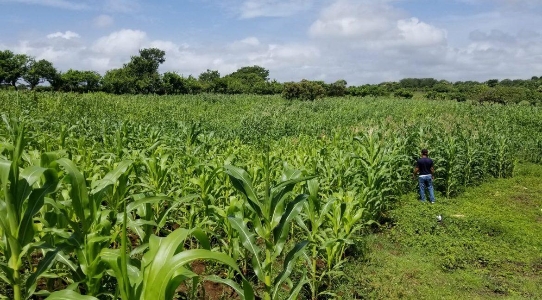 Terreno-Masaya-Nicaragua-Bienes-Raices 6