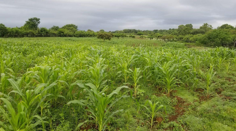 Terreno-Masaya-Nicaragua-Bienes-Raices 7