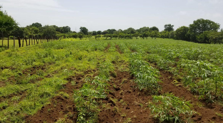 Terreno-Masaya-Nicaragua-Bienes-Raices 8