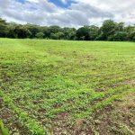 tierra-agricola-en-venta-granada-nicaragua