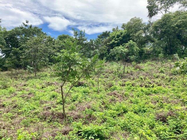 tierra-agricola-en-venta-granada-nicaragua (5)