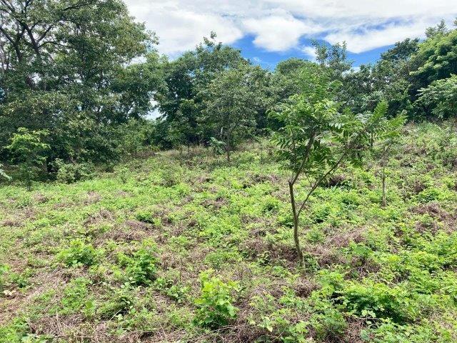 tierra-agricola-en-venta-granada-nicaragua (7)