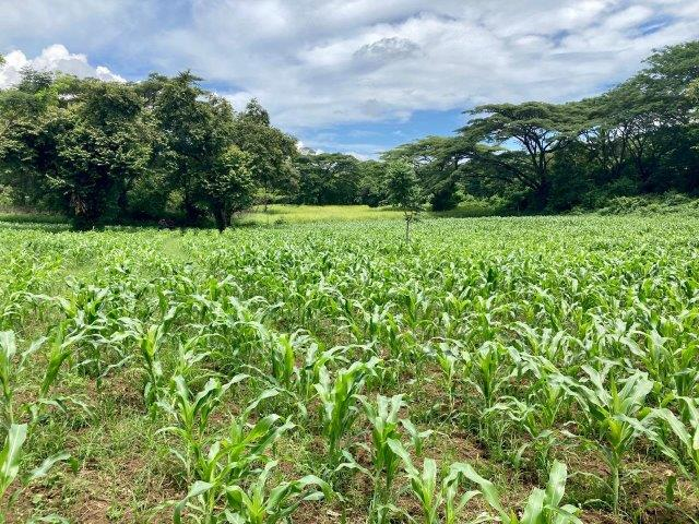 tierra-agricola-en-venta-monteverde-nicaragua (1)