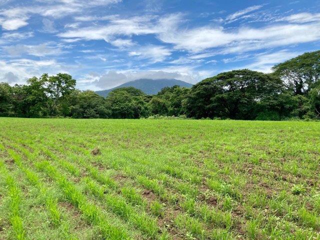 tierra-agricola-en-venta-monteverde-nicaragua (2)