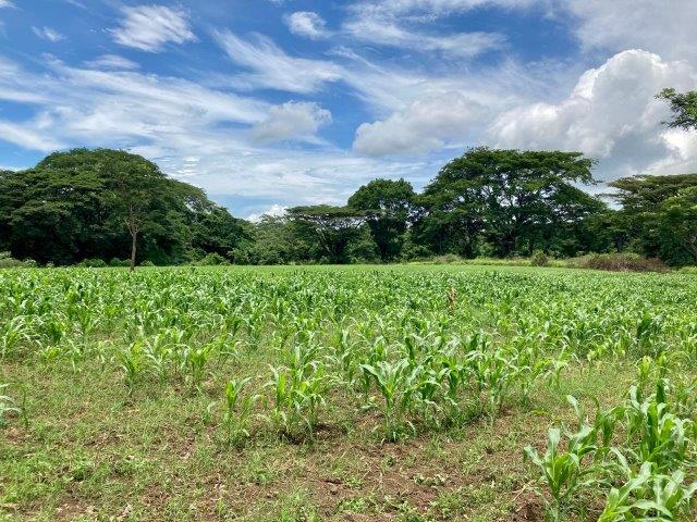 tierra-agricola-en-venta-monteverde-nicaragua (4)