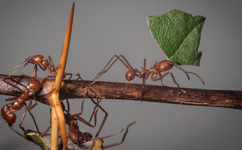 ants-in-Nicaragua