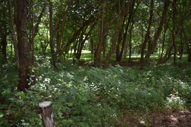 Vista-Eco-offgrid-Nicaragua (15)
