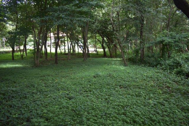 Vista-Eco-offgrid-Nicaragua (20)