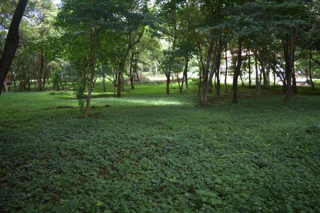 Vista-Eco-offgrid-Nicaragua (21)