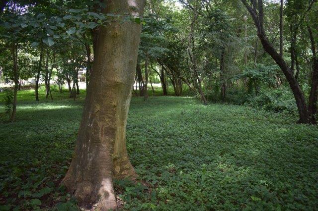 Vista-Eco-offgrid-Nicaragua (24)