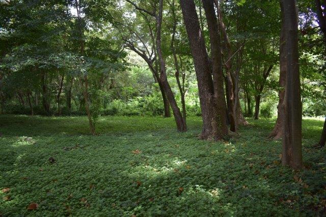 Vista-Eco-offgrid-Nicaragua (27)