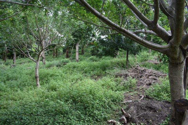 Mombacho-land-for-sale (10)