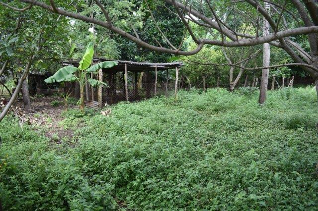 Mombacho-land-for-sale (11)