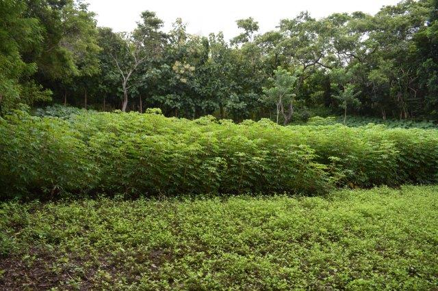 Mombacho-land-for-sale (3)