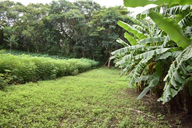 Mombacho-land-for-sale (4)