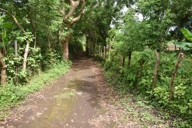 Mombacho-land-for-sale (5)