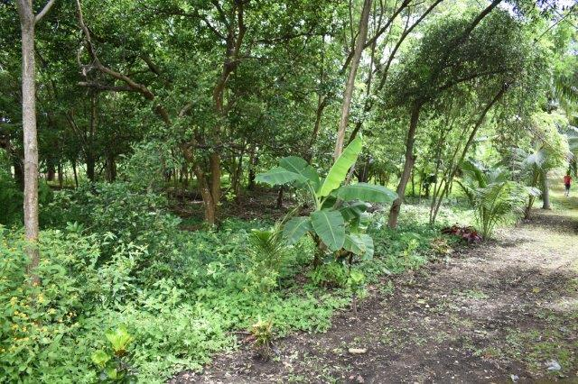 Mombacho-land-for-sale (7)