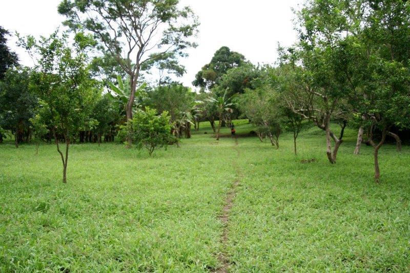 Nicaragua+real+estate+granda+farm+home+Quinta+Tio (16)