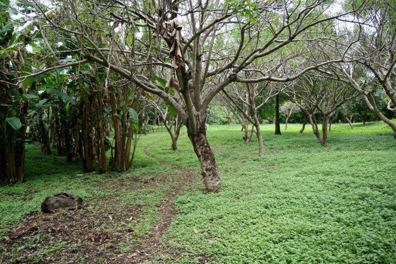 Nicaragua+real+estate+granda+farm+home+Quinta+Tio (17)