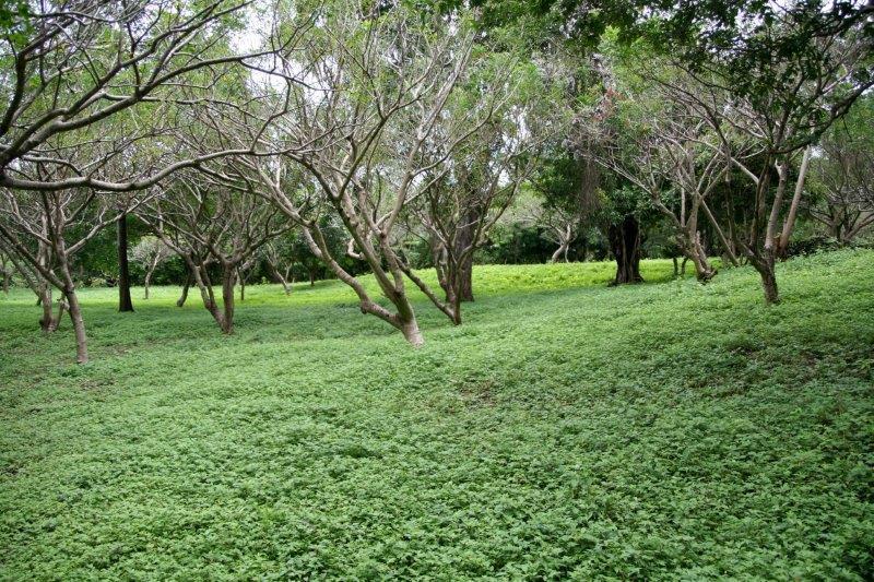 Nicaragua+real+estate+granda+farm+home+Quinta+Tio (18)