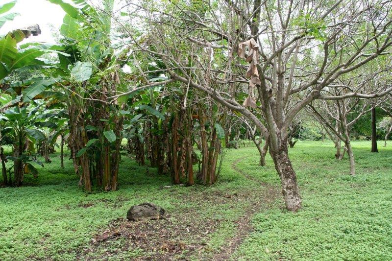 Nicaragua+real+estate+granda+farm+home+Quinta+Tio (19)