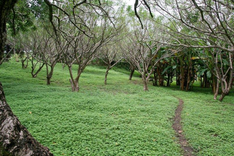 Nicaragua+real+estate+granda+farm+home+Quinta+Tio (20)