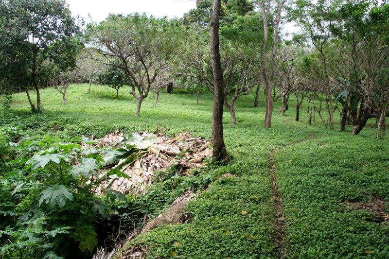 Nicaragua+real+estate+granda+farm+home+Quinta+Tio (22)