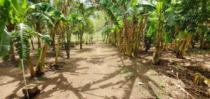 farm with fruit trees and laege residence outside of Leon