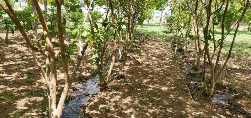 Nicaragua Real Estate – Malpaisillo Finca with home and buildings
