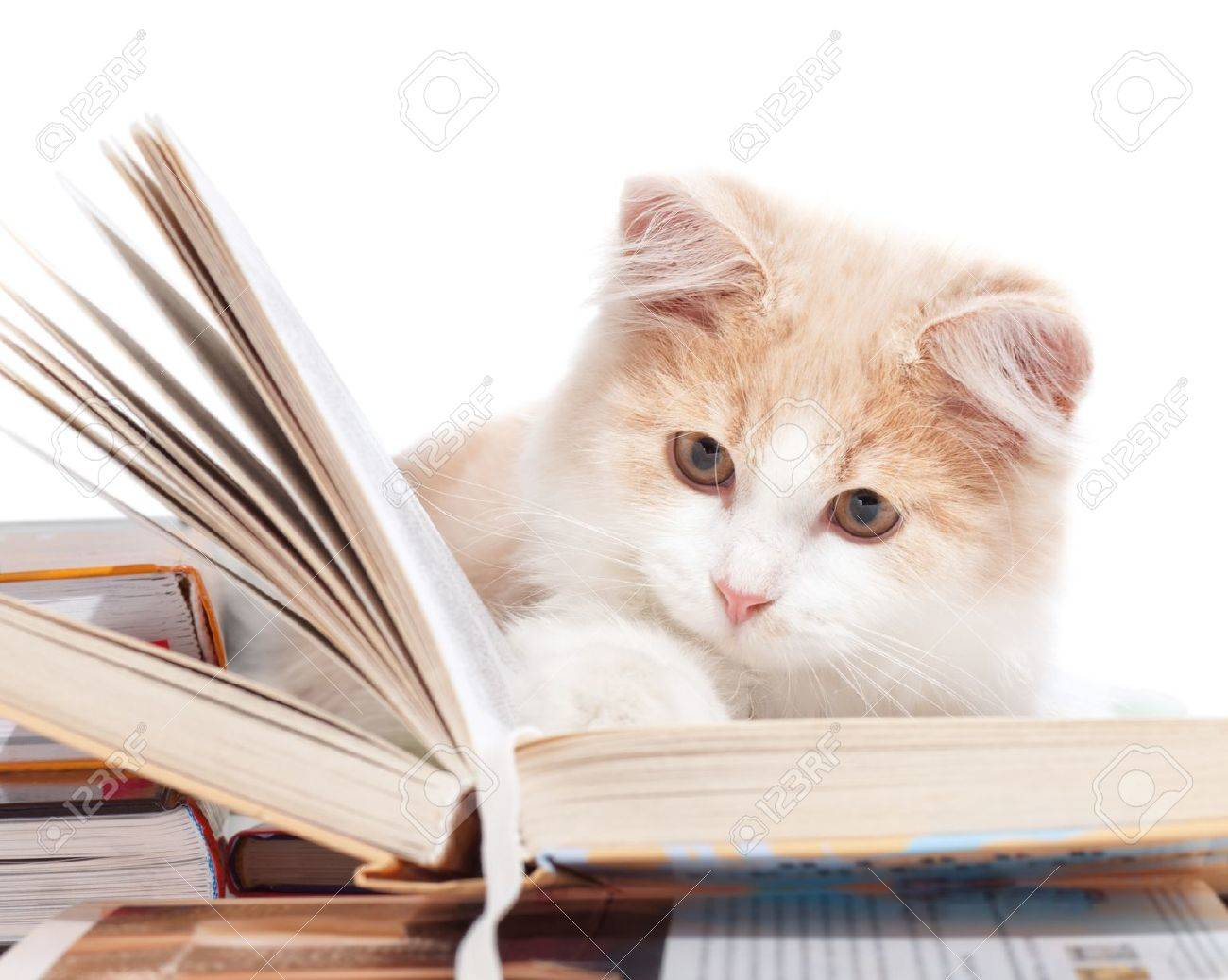 Little Cat Reading a Book