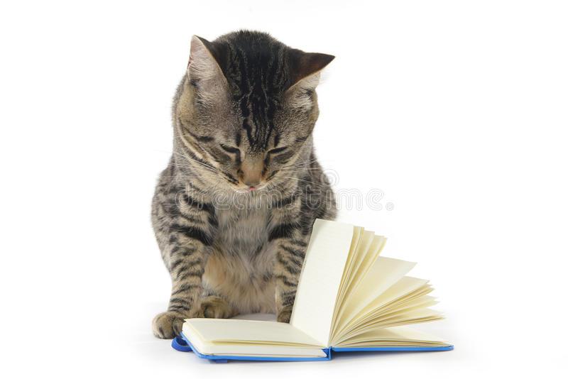 Gray Cat Reading