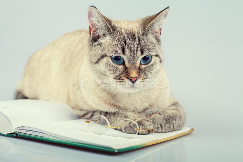 Cute Business Cat Reading