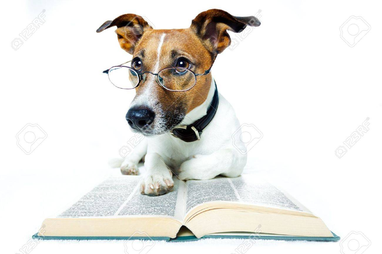 Dog in Glasses Reading Book