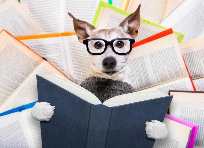 Smart Looking Dog Reading Book