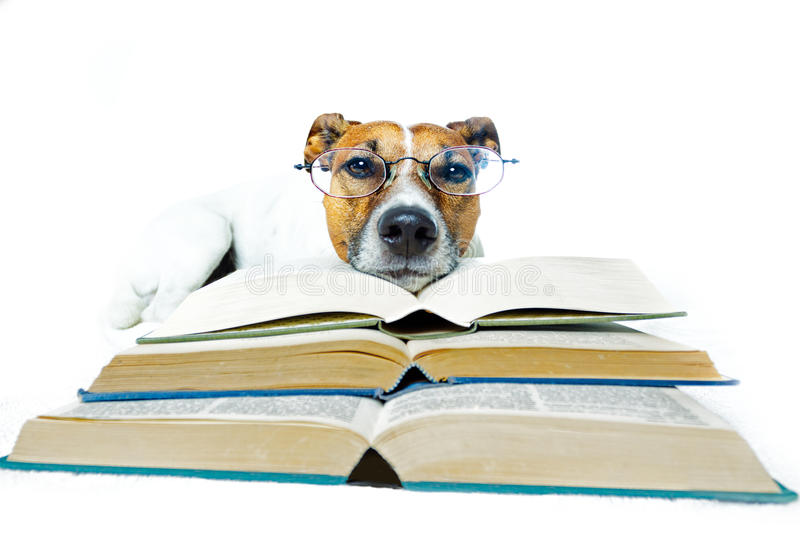 Dog Reading a Stacked Books