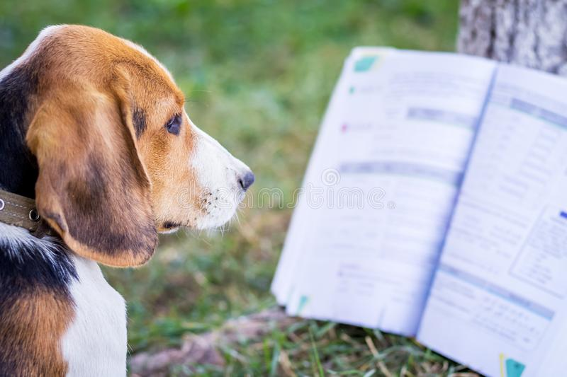 Dog Reading a Book Outside