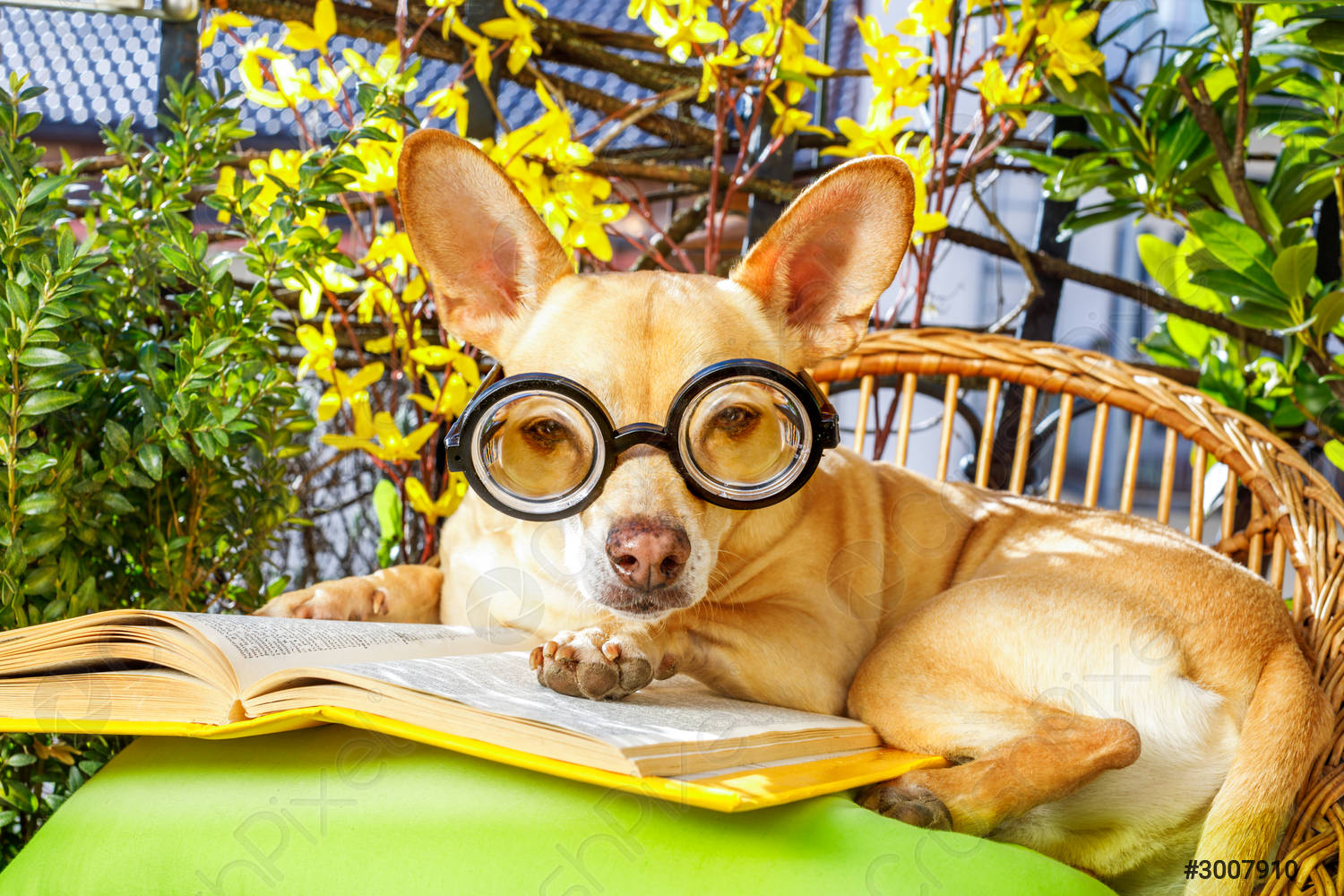 Dog Reading a Book Surrounded by Green Plants