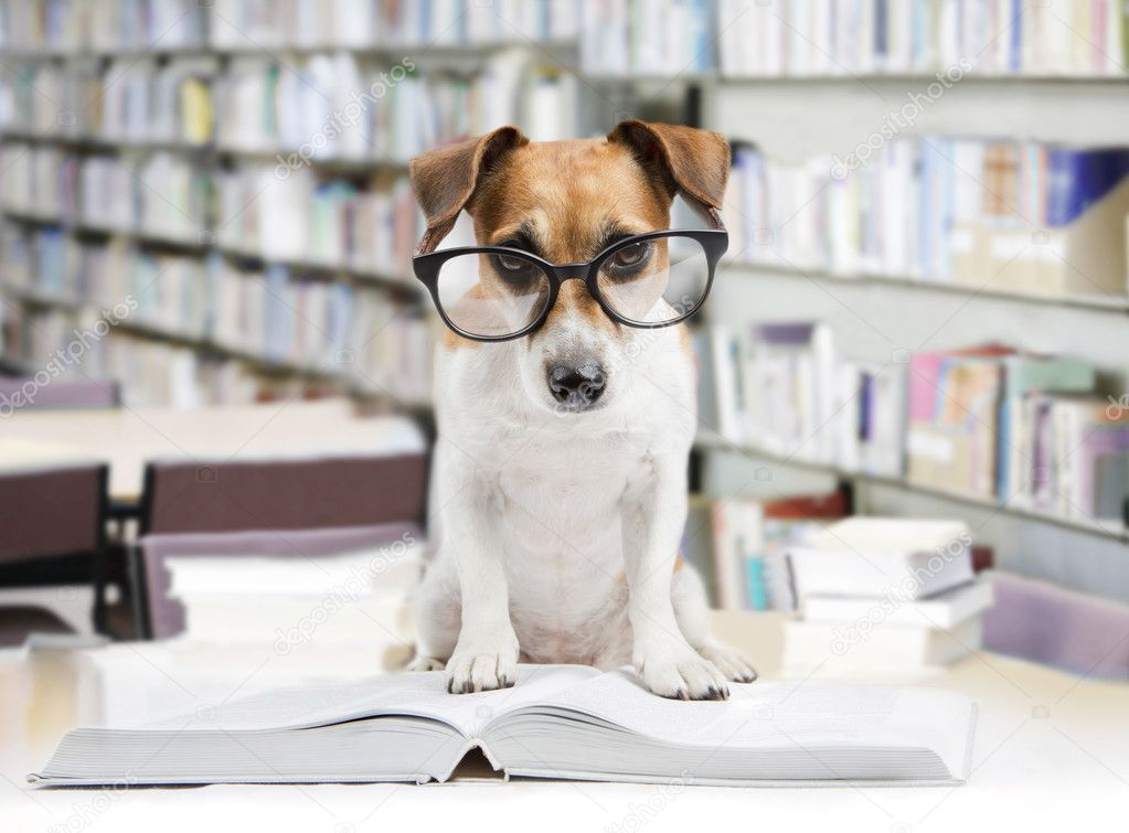 Dog Reading Books at the Library