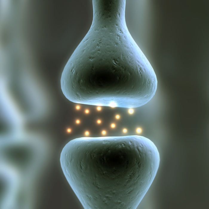 cannabinoid receptors